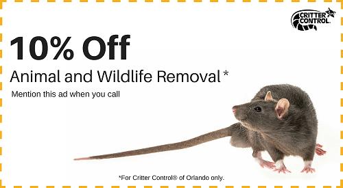 Save 10% on Animal Removal
