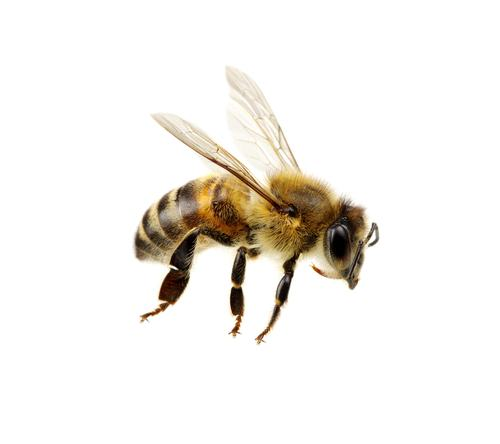 bees in orlando