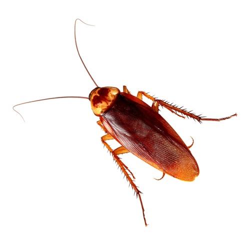 cockroachs in orlando