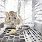 rat exterminator orlando