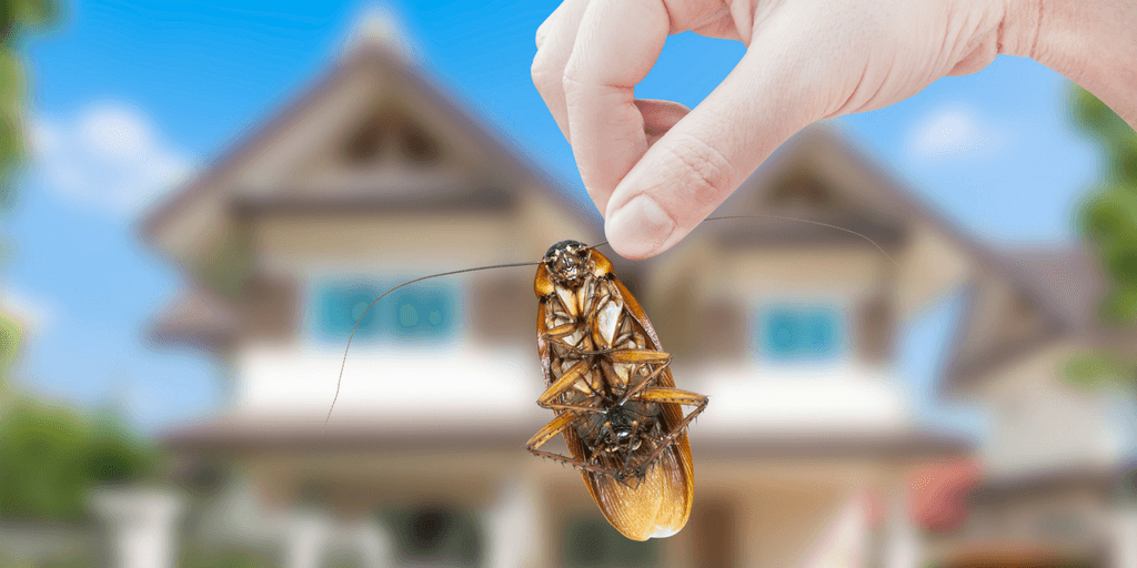 roach being removed from home during pest control service visit