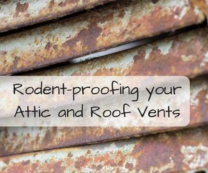 How To Rodent Proof Roof Vents And Attics Critter