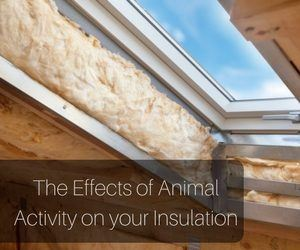 The Effects Of Animal Activity On Attic Insulation