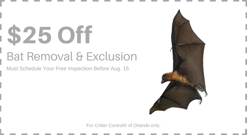 Save $25 on Bat Removal and Exclusion