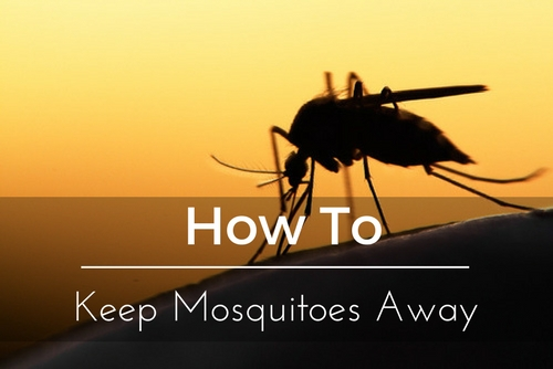 How To Keep Mosquitoes Out Of My Yard