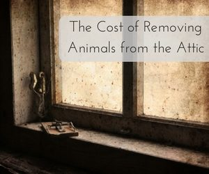The Cost of Removing Animals from the Attic