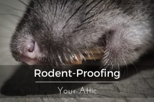 orlando rodent proofing
