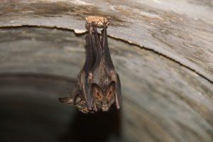 Orlando Bat Control