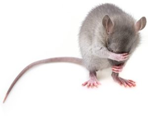Mice Orlando