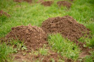 Animals burrowing underground