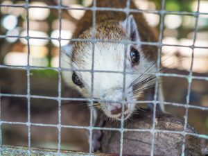 Humane Ways to Remove Squirrels