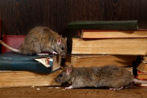 Commercial Rodent Removal