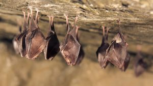 How to Keep Bats Out of Your Business