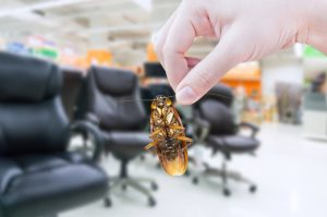 5 Ways to Keep Your Office Pest-Free
