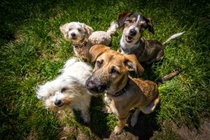 The Dangers of Wild Animals to Your Pets