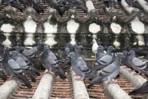 Keep Pigeons Away from Your Business