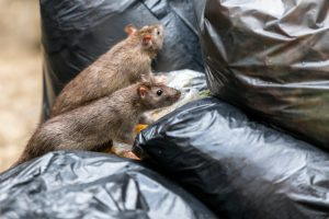 Steps For Effective Critter Prevention