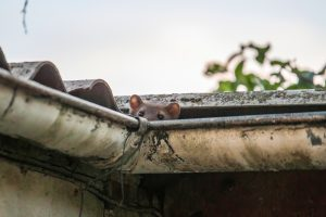 How Does Gutter Protection Help My Home
