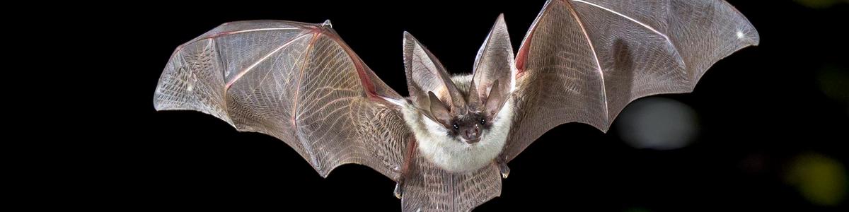 close up of a bat in orlando