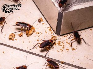 Cockroach Removal Services