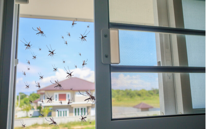 mosquitoes in a home in orlando