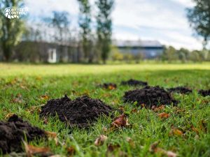 how-to-get-rid-of-moles-in-your-yard
