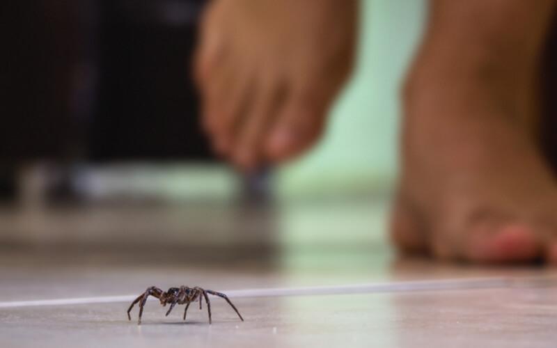 spider in an orlando home