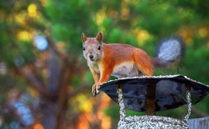How to Protect Your Chimney From Fall and Winter Wildlife