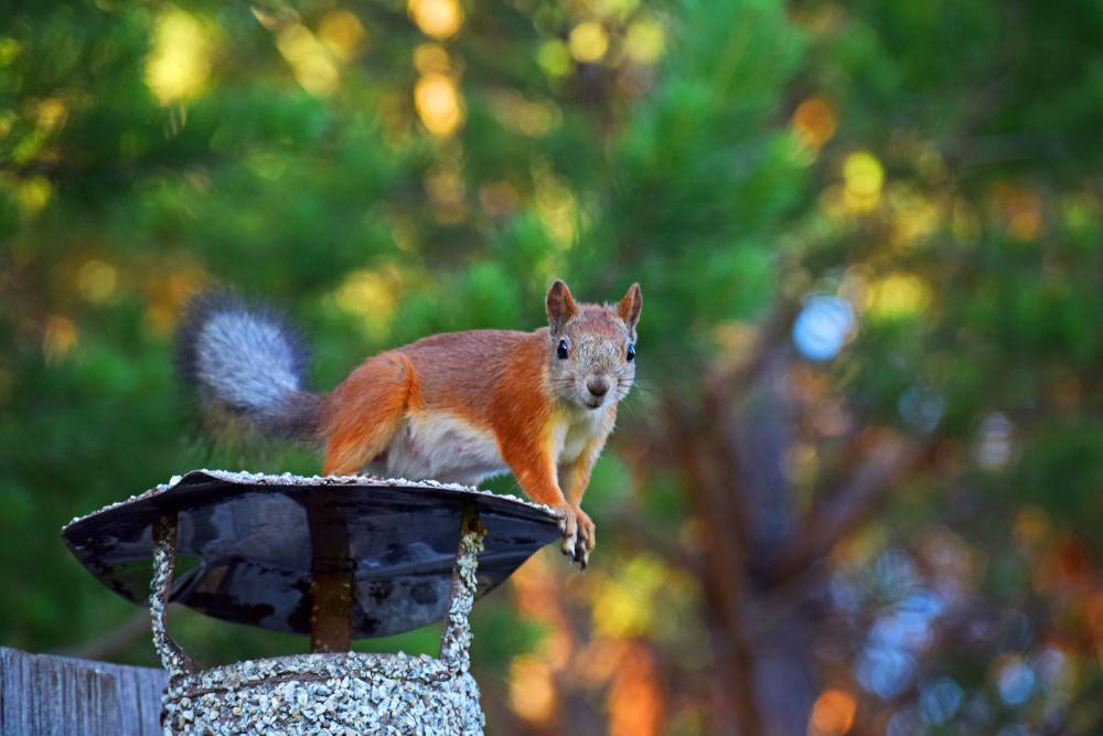 Can Squirrels Get Through My Chimney?