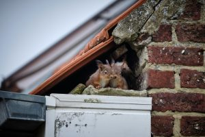 Signs Your Commercial Building Has Squirrels in the Walls