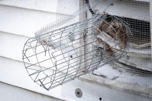 squirrel removal orlando