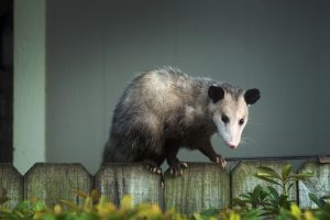 Critter Control of Lake County, FL