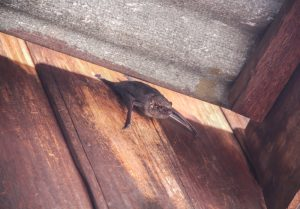 How to Get Bats Out of Your Commercial Building