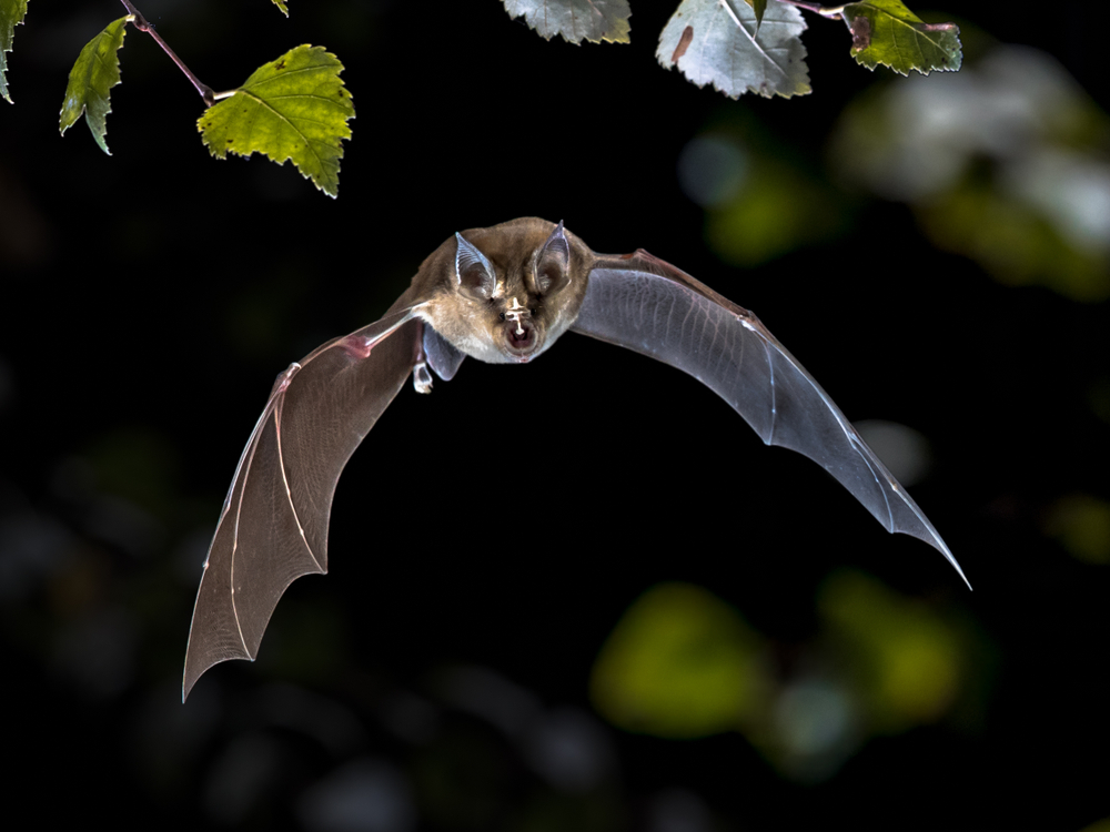 Everything You Need to Know About Bat Maternity Season