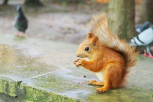 Squirrel Removal in Clermont