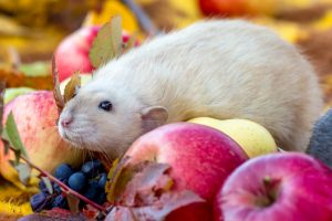 Why Your Commercial Building Needs a Trusted Rat Trapper