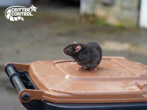critter control of heathrow