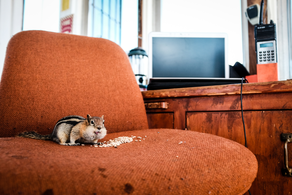 Making Wildlife Removal Work on an Office Budget