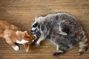 Are Wild Animals a Danger to My Pets?