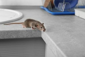 Habits to Help Prevent Pests in Your Office