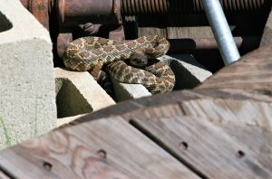 What to Do If You Hear Rattling Under Your Porch?
