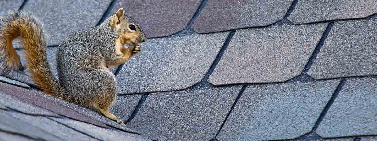 squirrel eating on roof