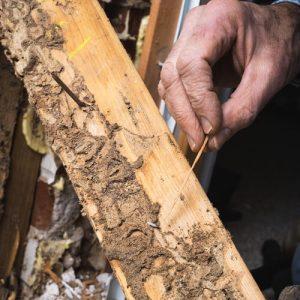 close up of termite damage in orlando